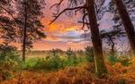 Обои Вид из леса с пожелтевшей травой
