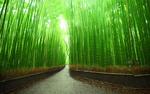 Обои Бамбуковый лес Сагано, Япония, Киото / Japan, Kyoto