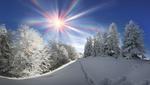 Обои Следы на снегу, среди деревьев, солнечным зимним днем