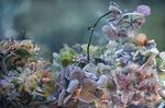 Обои Бледно розовые растения на размытом фоне, фотограф JHanna