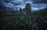 Обои Горные образования под облачным небом и на переднем плане цветы, фотограф Carlos F Turienzo