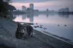Обои Кошка лежит на ступеньках перед водоемом, фотограф Tomomichi Ito