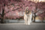 Обои Кошка идет по дороге, фотограф Tomomichi Ito