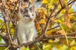 Обои Котенок на осеннем дереве, фотограф Hrvoje Simich