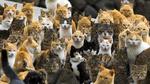 Обои Коты на небольшом острове Аошима, Япония