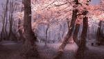 Обои Осенний парк с лавочками, фотограф Mevludin Sejmenovic