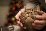 Обои Мордочка кота в человеческих руках на размытом фоне
