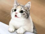 Обои Кошка куда-то смотрит, by 1-N-F-1-N-1-T-Y -Polina Chelyadinova