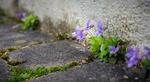 Обои Цветочки у дороги возле стены