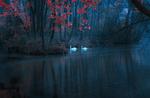 Обои Два лебедя на реке Bosnia River, Sarajevo, Bosnia / Босния, Сараево, Босния, фотограф Mevludin Sejmenovic