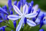 Обои Весенние цветы, фотограф Cindy Graham