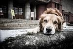 Обои Пес лежит на асфальте