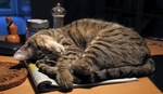 Обои Серый полосаты кот спит на раскрытом журнале на столе