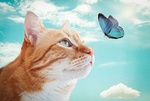 Обои Рыжая кошка смотрит на бабочку