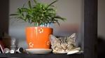 Обои Кошка у горшка с цветком