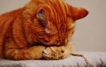Обои Рыжий кот закрыл лапками глаза