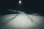 Обои Лунная зимняя ноь