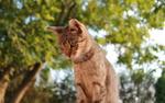 Обои Кот на фоне природы