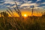 Обои Закат солнца над полем