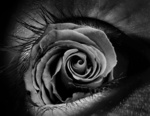 Обои Глаз с розой в нем, by Victor Ogoshi