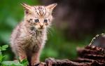 Обои Грустный котенок на деревяшке