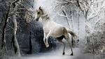 Обои Белая лошадь встала на дыбы в заснеженном лесу