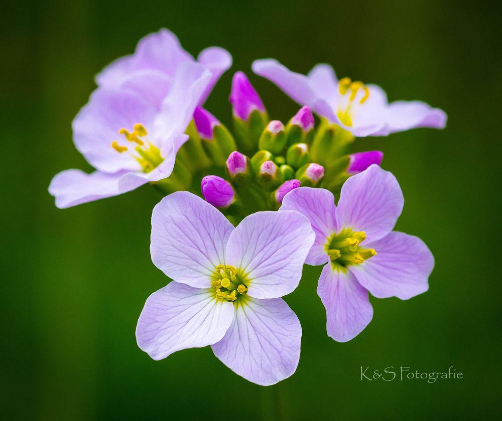 Обои для рабочего стола Яркие весенние цветы, K&S Fotografie