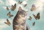 Обои Зажмурившийся от солнца кот и бабочки вокруг него