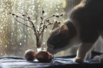 Обои Кошка нюхает пасхальные крашенки, by Olga N