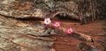 Обои Цветы выросшие на останках трухлявого дерева, by Katzenfee50