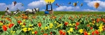 Обои Цветочное поле тюльпанов и нарциссов, белая лошадь. запряженная в бричку. воздушные шары в небе, весенняя фантасмагория, by Gerhard Gellinger