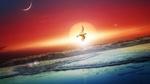 Обои Чайка летящая на берегу моря, под солнцем на закате, где на небе виднеется лунный месяц