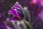 Обои Цветок сон - трава под дождем
