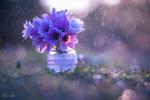 Обои Цветы сон-трава в баночке под дождем, фотограф Natassa Triantafillou