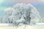 Обои Белая лошадь застыла в стойке, на фоне зимнего пейзажа природы под падающим снегом, by Anja Osenberg