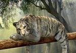 Обои Белый тигр отдыхает на бревне над землей, by Anja Osenberg
