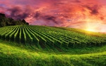 Обои Плантация на фоне закатного неба
