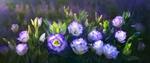 Обои Бело-фиолетовые цветы эустом, растущие на клумбе в саду