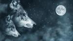 Обои Портрет волков на фоне падающего снега и луны в сумрачном небе, by Comfreak
