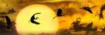 Обои Силуэты летящих журавлей на фоне громадного диска заходящего солнца, by Gerhard Gellinger