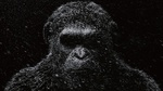 Обои Морда гориллы на черном фоне с тенью на глазах, с падающим на нее снегом