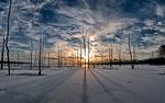 Обои Деревья с длинными тенями на снегу на фоне солнца и расписных облаков, работа Frozen фотографа Bob Jagendorf