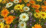 Обои Разноцветные полевые цветы в 3D графике