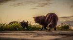 Обои Две кошки на природе, by Dimitris Vetsikas