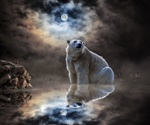 Обои Парень на скале смотрит на огромного белого медведя, сидящего в воде, на фоне тумана лунной ночью, by Imagine_Images