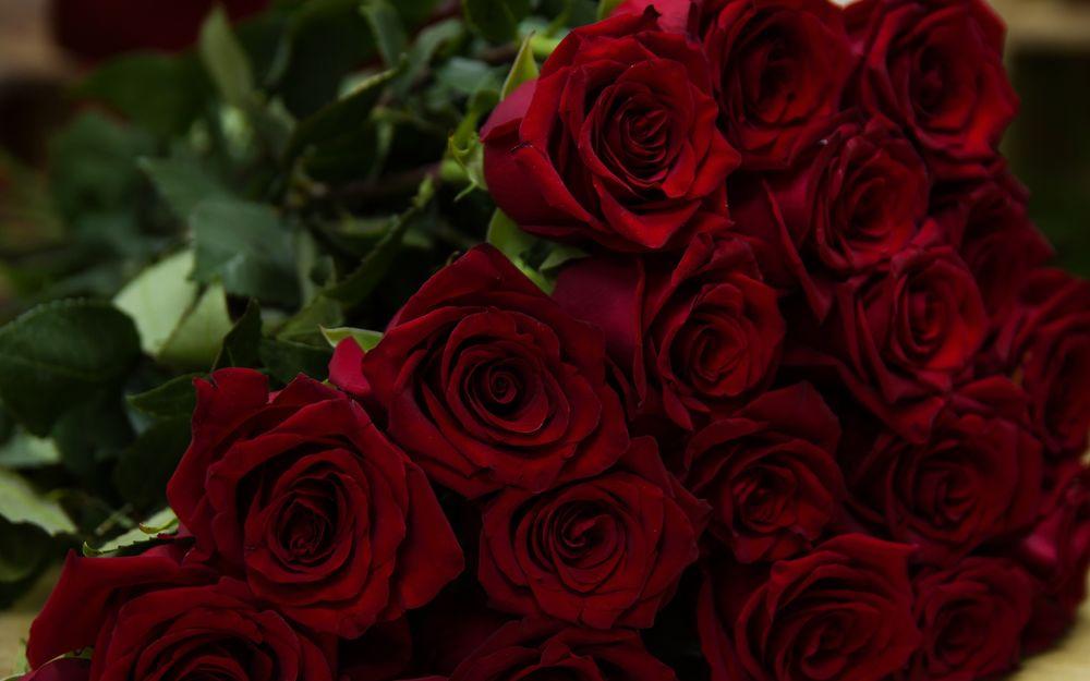 """Картинки по запросу """"букет бордовых роз"""""""
