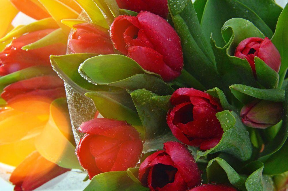Обои для рабочего стола Букет красных тюльпанов, by Gаbor Adonyi