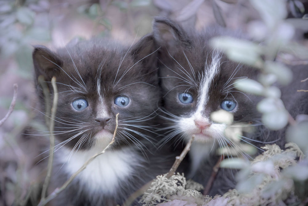 Обои для рабочего стола Два котенка в траве, фотограф Jоrn Allan Pedersen