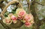 Обои Розы в корзине, висящие на ветке дерева, by Silvia & Frank