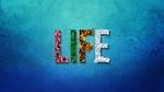 Обои Слово LIFE / ЖИЗНЬ, буквы которого выполнены, как символы четырех пор года: весны, лета, осени и зимы, by Jonny Lindner